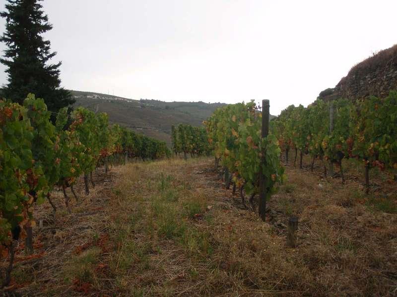 Vlezl jsem i do vinohradu