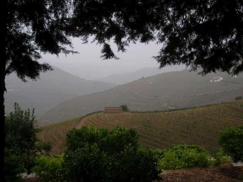 Pršelo a vinobraníci uznali, že už to dnes nemá cenu