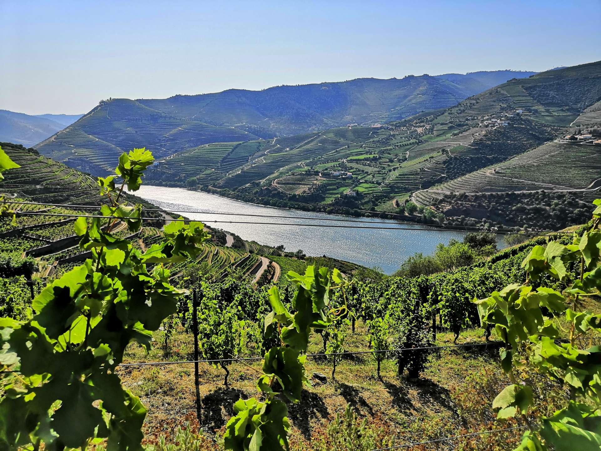 Podvečerní Douro z vinohradu v Quinta do Seixo.